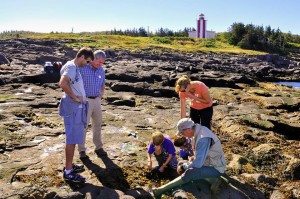 Exploring the Bay of Fundy Shores with Gael Tours