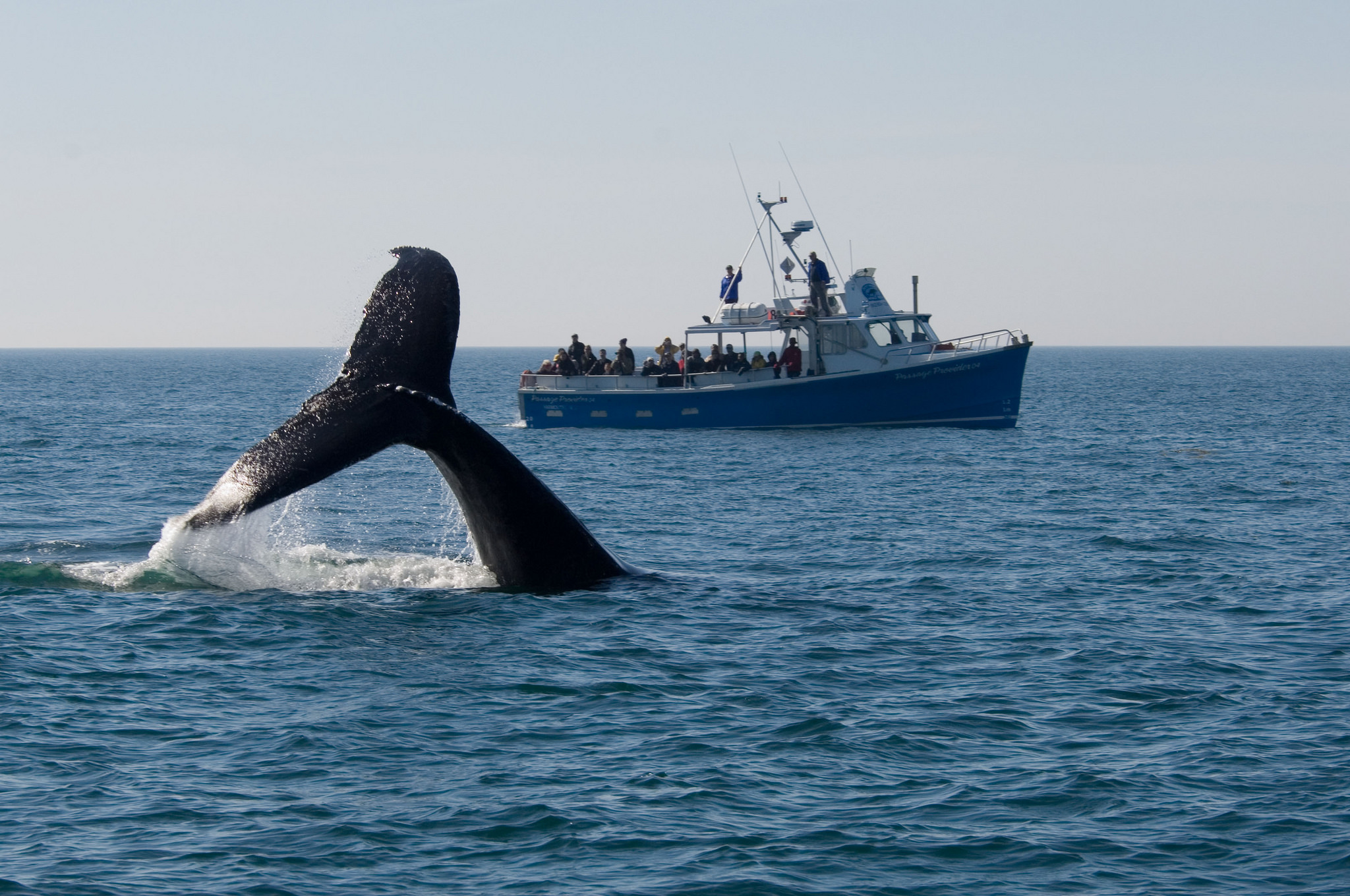 Digby Whale Watching Tours