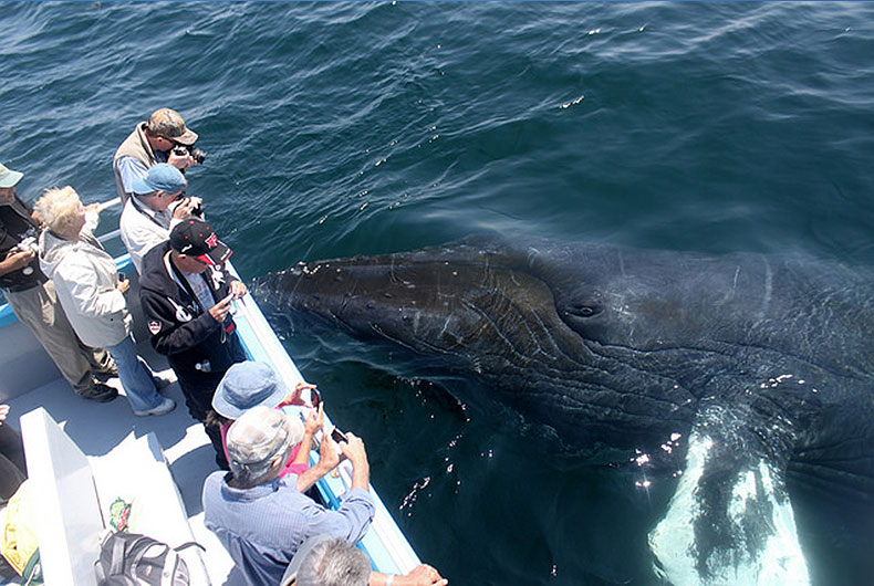 Whale watching - up close encounters