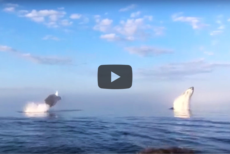 Whale Watching Spectacle